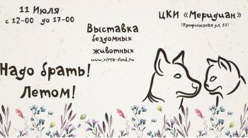 Заставка для - «Надо брать!»: выставка кошек и собак, на которой можно найти друга