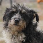 Заставка для - Благотворительная ярмарка на выставке беспородных собак «Дворянская губерния»