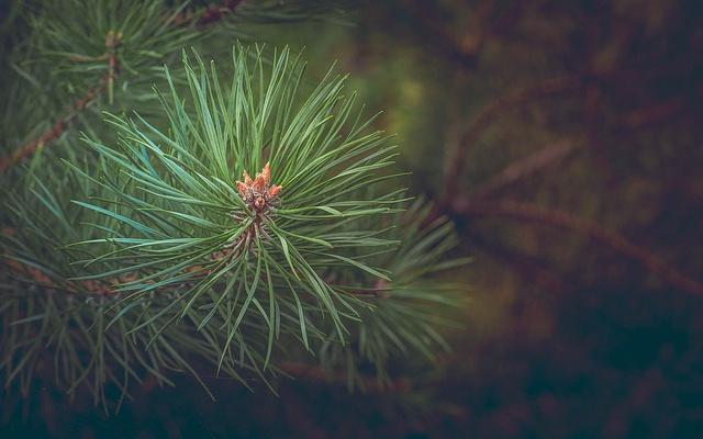 Заставка для - «Наш лес. Посади свое дерево» в Подмосковье
