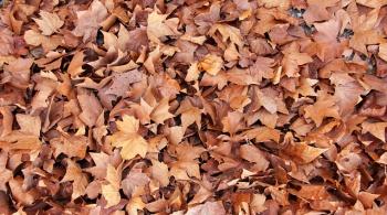 Заставка для - Чем опасна уборка листвы с газонов и как с ней бороться