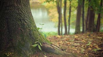 Заставка для - Высадим миллион деревьев на постадавшем от пожаров Байкале