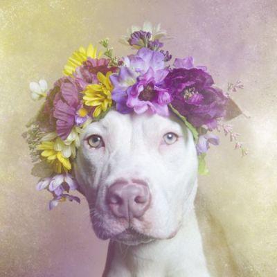 Заставка для - Сила цветов: собаки в венках