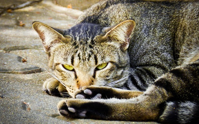 Заставка для - Всемирный день защиты животных отметят выставками бездомных животных