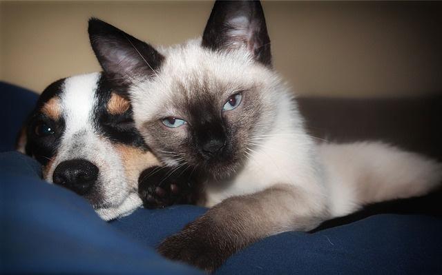 Заставка для - «Пора домой!»: всероссийский сервис поиска хозяев для домашних животных