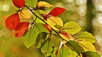 Заставка для - Как посадить целый лес, не выходя из дома