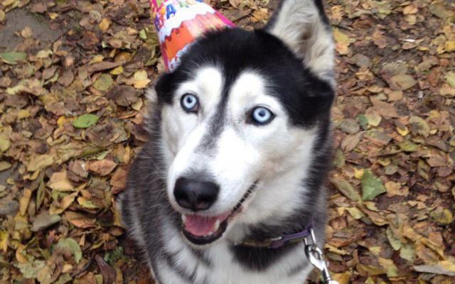Заставка для - День рождения одной счастливой собаки