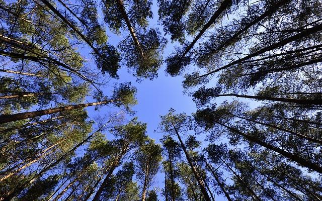 Заставка для - Волонтеры Томской области высадили в 2015 году 40 000 деревьев