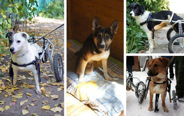 Заставка для - Фонд помощи животным «Ника» собирает средства на дом для собак-инвалидов