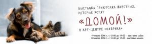 выставка приютских животных