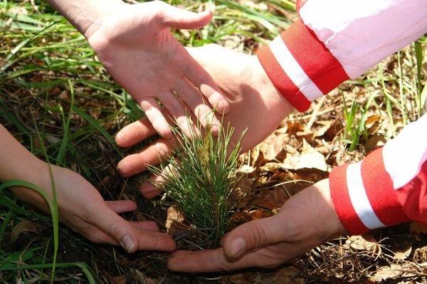 Заставка для - Открыт сбор средств на восстановление лесов на острове Ольхон