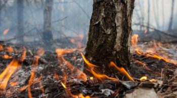 Заставка для - Гринпис России: как бороться с пожарами?