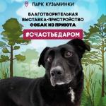 Заставка для - Благотворительная выставка собак из приюта «Красная сосна» #СЧАСТЬЕДАРОМ