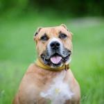 Заставка для - Выставка собак «Мы в ответе за тех, кого приручили»