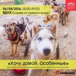 Заставка для - Благотворительный фестиваль в поддержку собак-инвалидов «Хочу домой. Особенные»