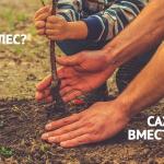 Заставка для - Гринпис приглашает посадить лес в Подмосковье