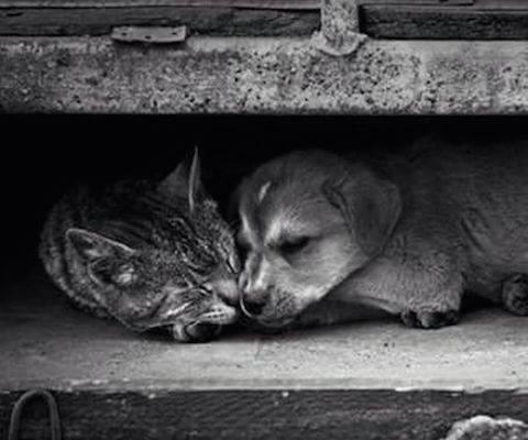 Заставка для - Фонд «Дарящие надежду» собирает средства на стерилизацию бездомных животных