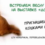 Заставка для - Весенняя благотворительная выставка в пользу бездомных животных «Домой!»