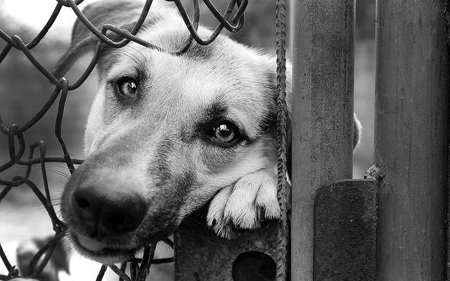 Заставка для - Как помочь бездомным животным?