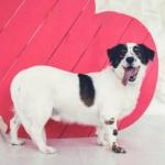 Заставка для - Выставка-пристройство «Всем по собаке»
