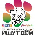 Заставка для - Выставка-пристройство бездомных животных «Пушистые лапки ищут дом»