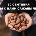 Заставка для - Посадка леса с «Гринпис России»