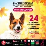 Заставка для - Выставка-пристройство собак из приютов #СЧАСТЬЕДАРОМ