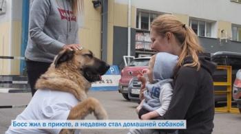 Заставка для - Как помочь бездомным животным