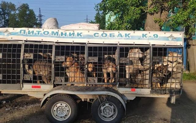 Заставка для - Поможем людям и животным Иркутской области