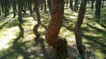 Заставка для - Спасем Танцующий лес