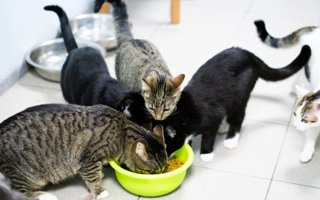 Заставка для - О «бедненьких кошках» замолвите слово!