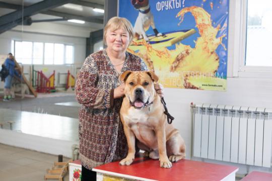 Заставка для - Собака в помощь